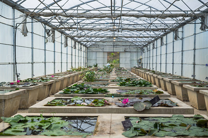 A botanical garden with water lilies  floating by Jovo Jovanovic for Stocksy United