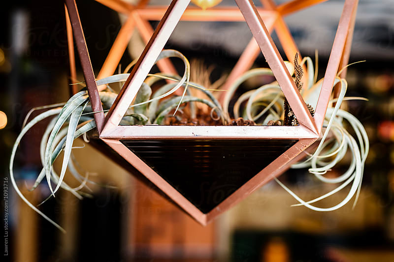 Close-up of growing plants in lamp by Lawren Lu for Stocksy United