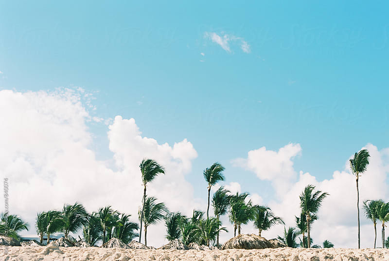 A row of palm trees blow in the breeze on a white sand Caribbean beach by Joey Pasco for Stocksy United
