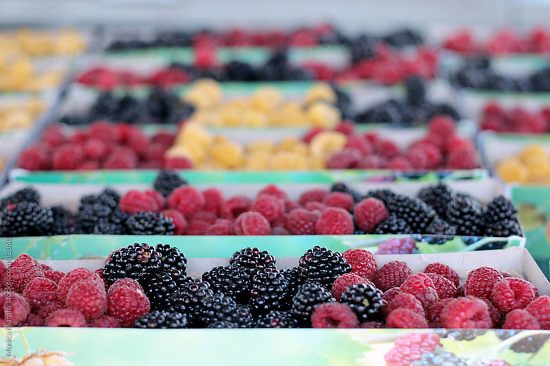 Rows of berries at the local farmers market by Monica Murphy for Stocksy United