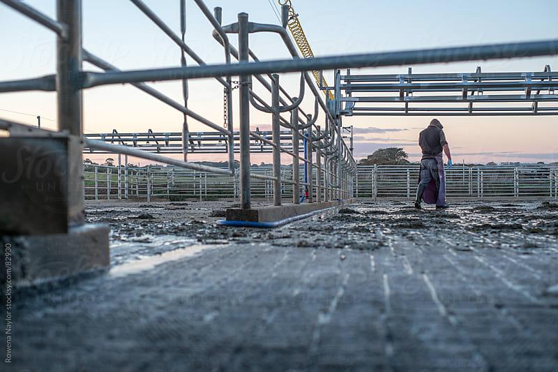 Farmer in Milking Yard by Rowena Naylor for Stocksy United