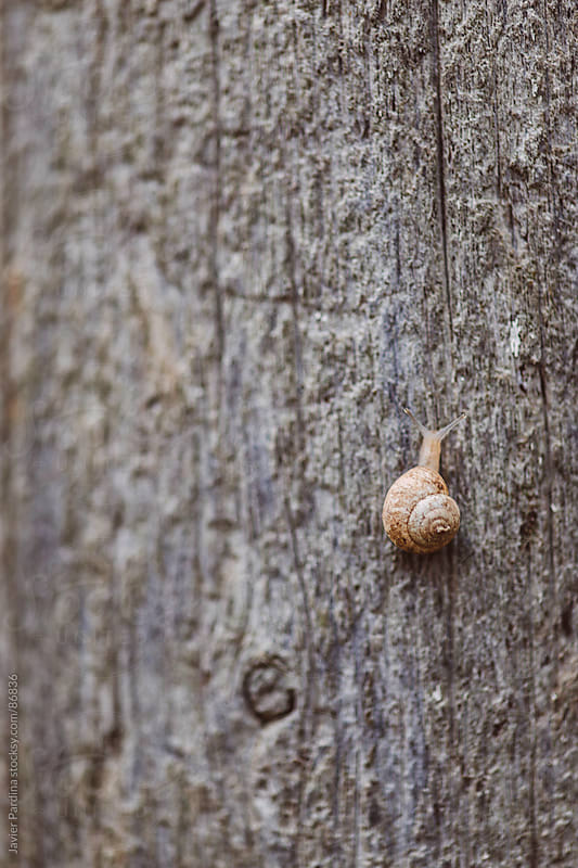 Snail up on the wood by Javier Pardina for Stocksy United