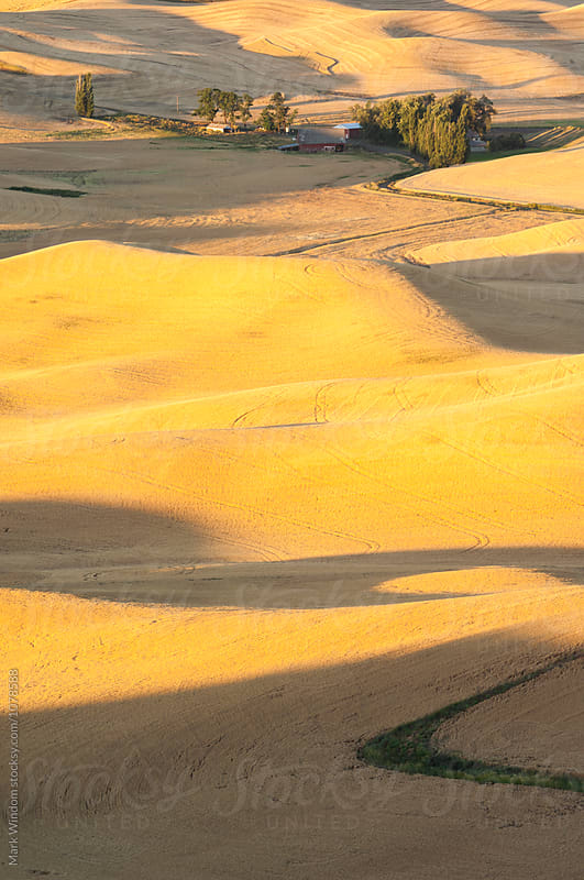 Summer Wheat in the Palouse by Mark Windom for Stocksy United