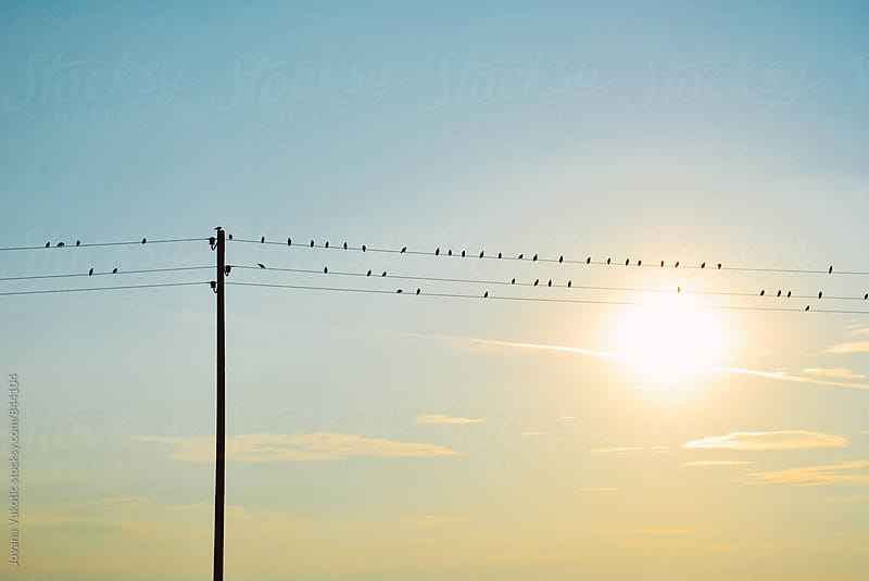 Birds on wire by Jovana Vukotic for Stocksy United
