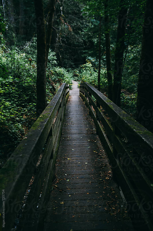 wooden bridge surrounded by redwood trees in a forest. by kkgas for Stocksy United