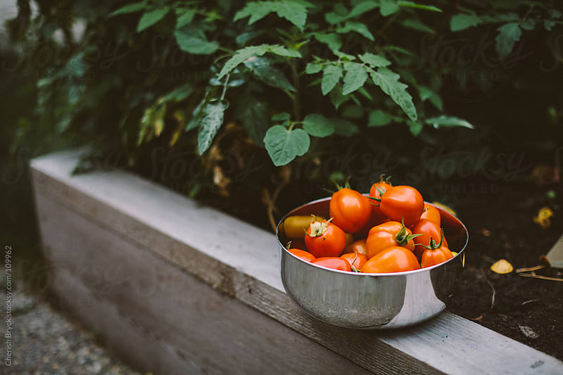 A bowl of red tomatoes sits on a garden bed. by Cherish Bryck for Stocksy United
