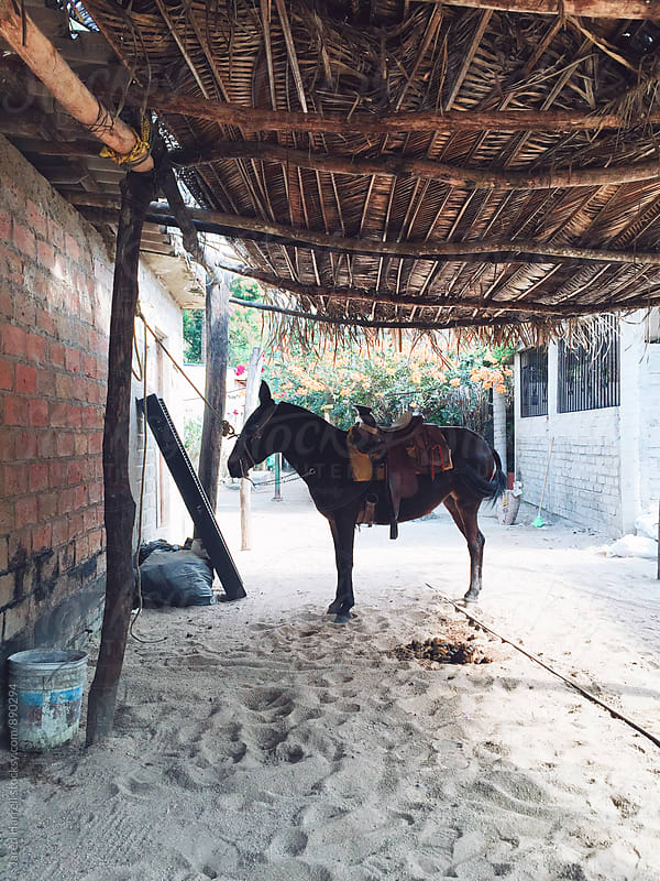 A Horse Stable on the Beach in Yelapa, Mexico by Jared Harrell for Stocksy United
