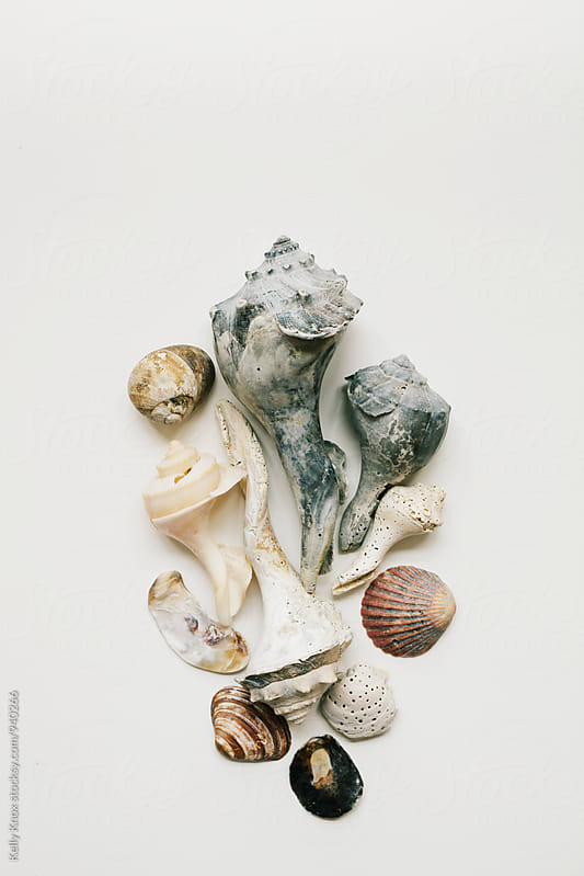 grouping of weathered shells on a white background by Kelly Knox for Stocksy United