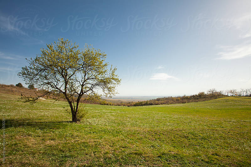 Lonely Tree in the Meadow by Mosuno for Stocksy United
