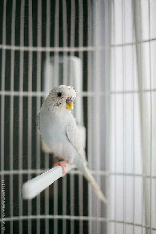 Portrait of my bird friend by Javier Pardina for Stocksy United