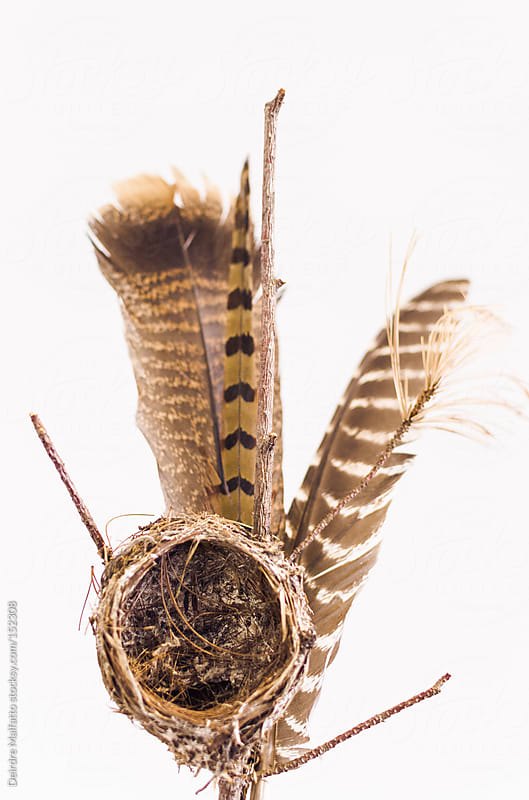 bird's nest and feathers by Deirdre Malfatto for Stocksy United