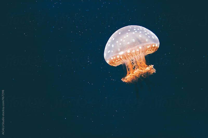 Brown jellyfish floating in the water by ACALU Studio for Stocksy United