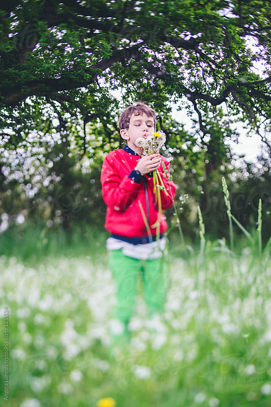 Boy blowing bunch of dandelions in a field by Angela Lumsden for Stocksy United