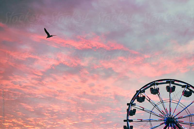 Seagull flies by ferris wheel at sunset by Cara Dolan for Stocksy United