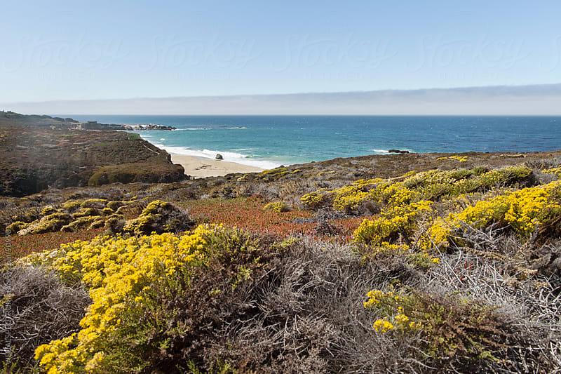 Seaside Vegetation by VISUALSPECTRUM for Stocksy United