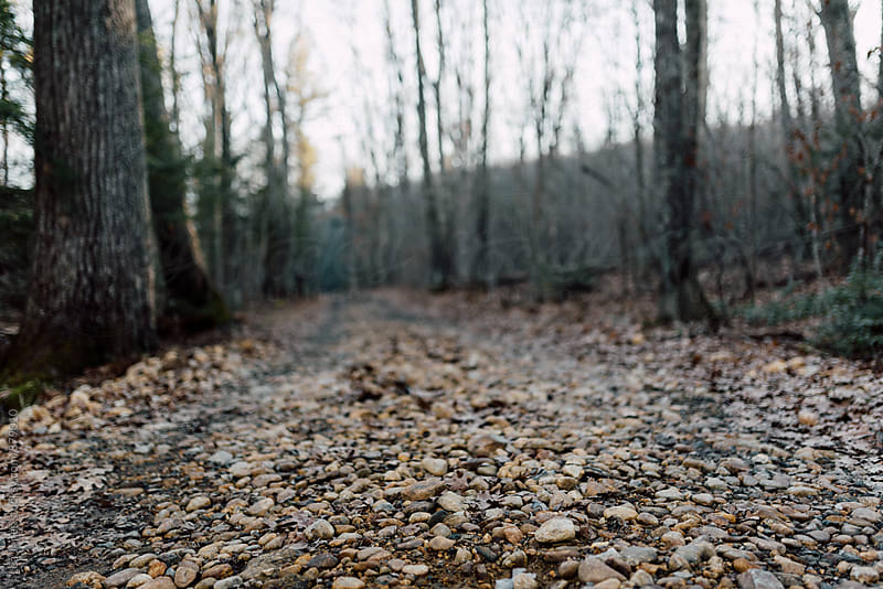 rocky path in the forest by Léa Jones for Stocksy United