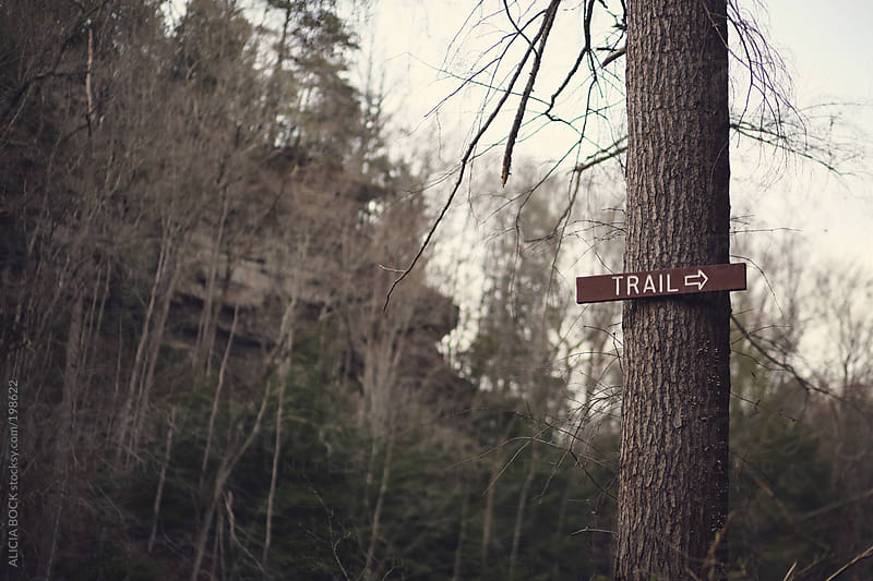 Trail Sign On A Tree by ALICIA BOCK for Stocksy United