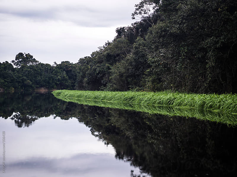 Tributary off the Amazon - Rio Negre river, Brazil by DV8OR for Stocksy United