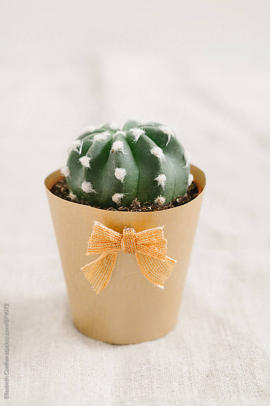 Mini succulent cactus  in golden handmade paper flower pot by Elisabeth Coelfen for Stocksy United