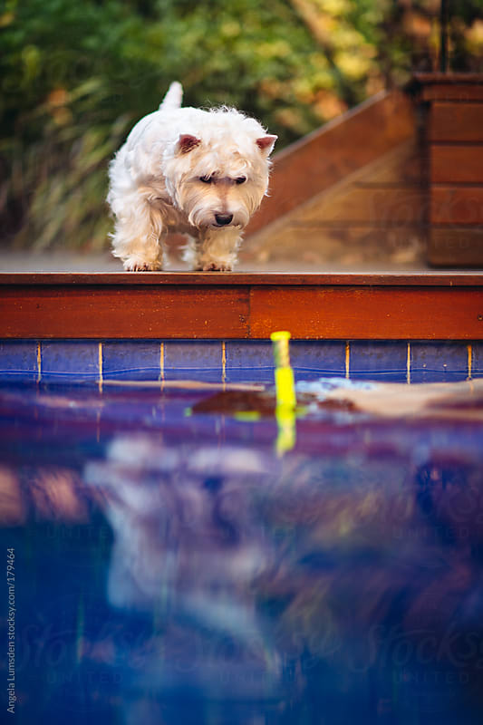 Dog watching a boy in a swimming pool by Angela Lumsden for Stocksy United