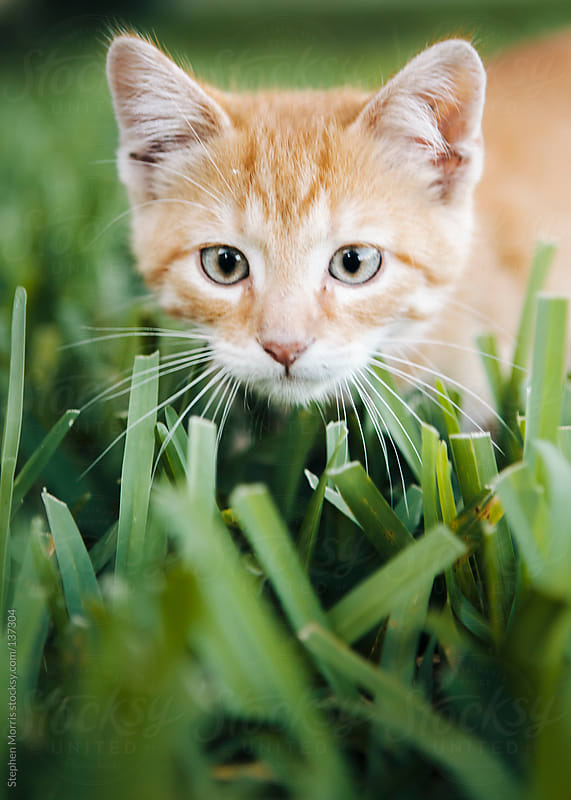 Cute Kitten by Stephen Morris for Stocksy United
