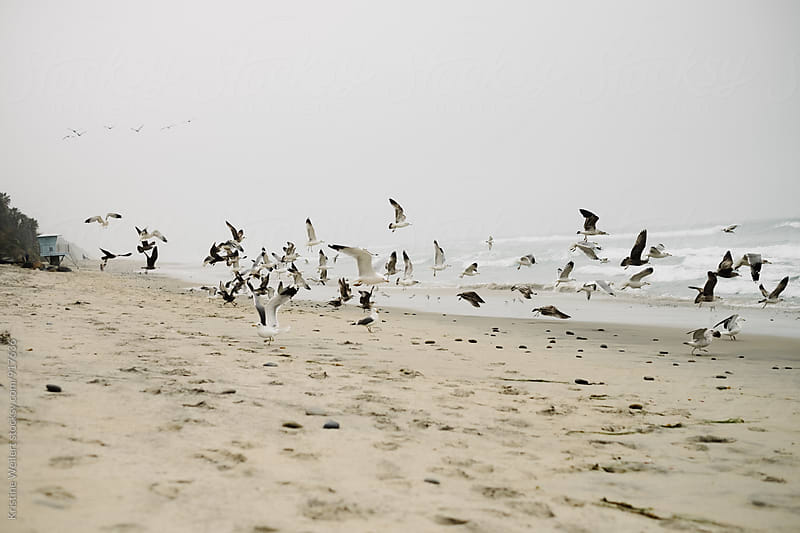 Birds flying away on the Beach by Kristine Weilert for Stocksy United