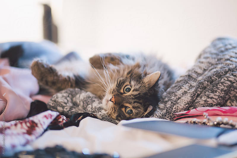 Cat lying on a pile of sweaters by Ania Boniecka for Stocksy United
