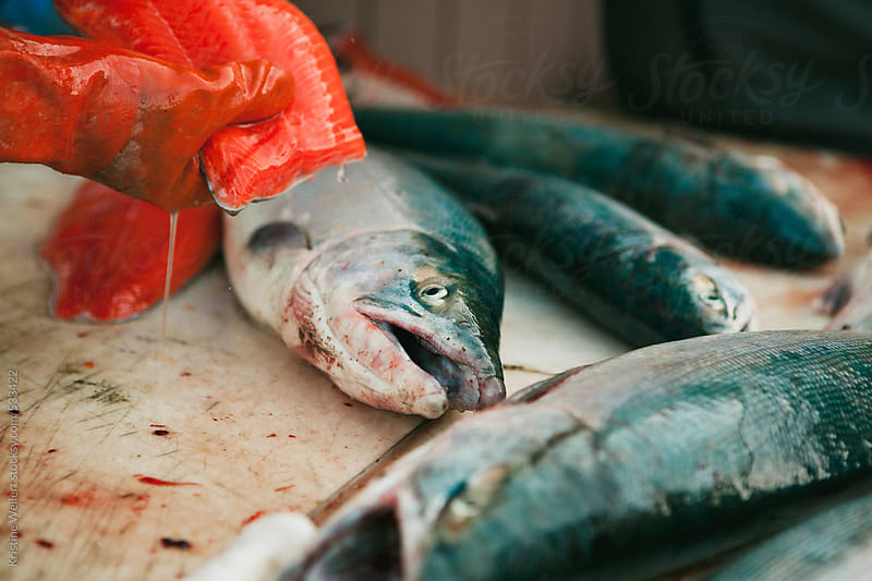 Fisherman filleting and preparing a fish by Kristine Weilert for Stocksy United