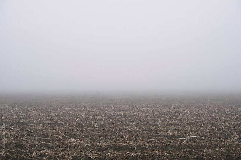 Foggy landscape background by GIC for Stocksy United