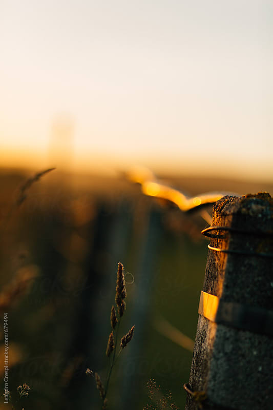 A close-up of a post fence at sunset by Leandro Crespi for Stocksy United