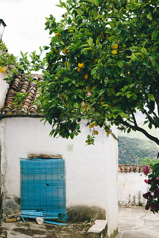 Orange tree in an Andalucian Village by kkgas for Stocksy United