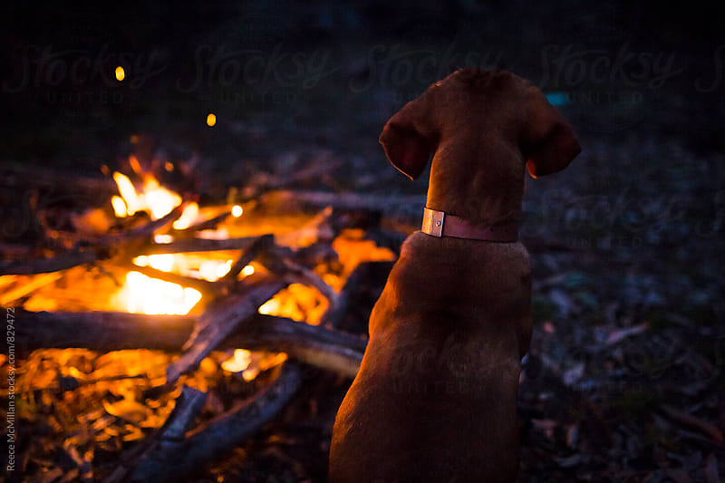 Dog by campfire by Reece McMillan for Stocksy United