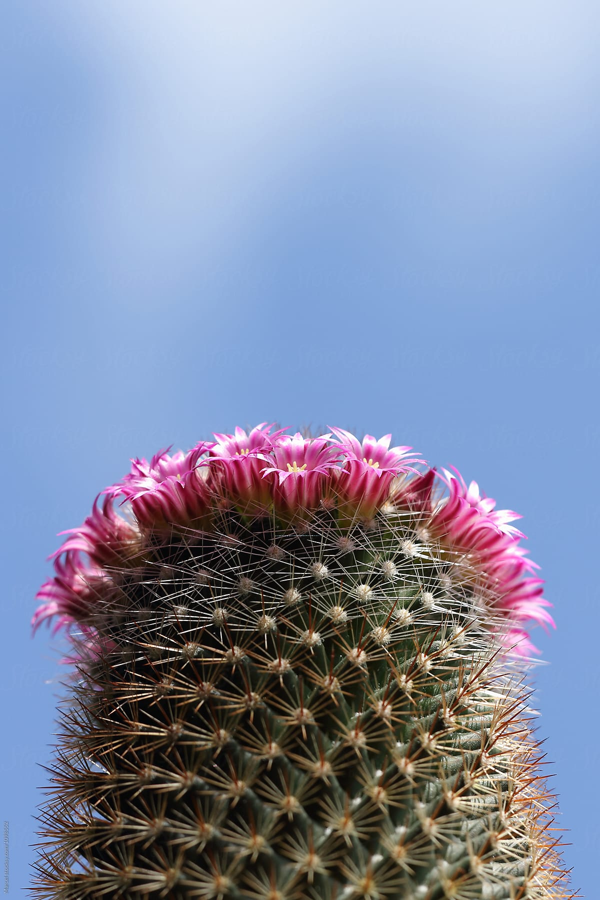 Ring Of Flowers On A Cactus Stocksy United