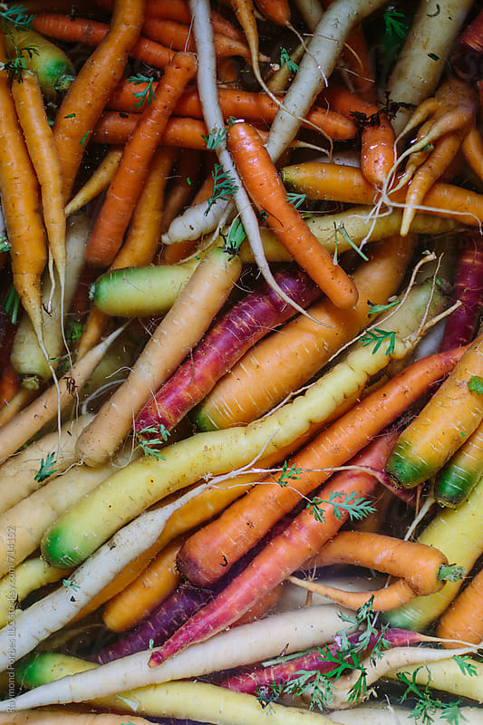 Organic Carrots in Water by Raymond Forbes LLC for Stocksy United
