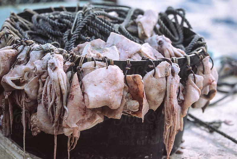 Baited hooks in a tub for a sablefish (blackcod) longline fishery by Mihael Blikshteyn for Stocksy United