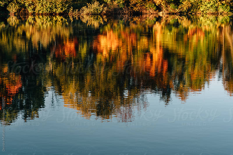 pond with reflections of trees with autumn leaves by Deirdre Malfatto for Stocksy United