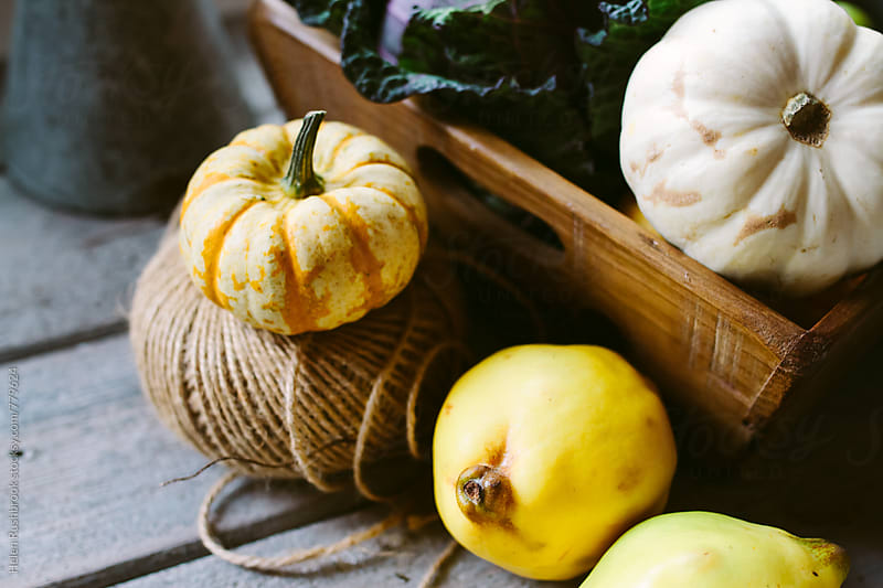 Quince and squash by Helen Rushbrook for Stocksy United