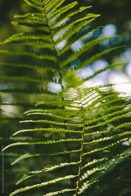 Abstract fern fronds by Helen Rushbrook for Stocksy United