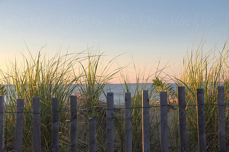 Grasses and fencing at dunes on the beach by Monica Murphy for Stocksy United
