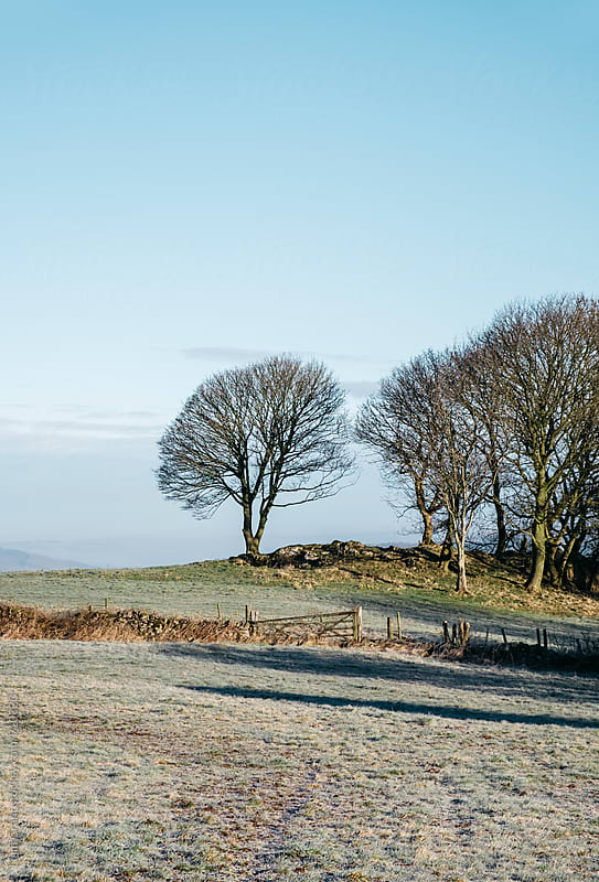 Trees and frost covered field in morning light. Derbyshire, UK. by Liam Grant for Stocksy United