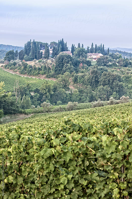 Typical Tuscan hill, with vineyard in the foreground by Beatrix Boros for Stocksy United