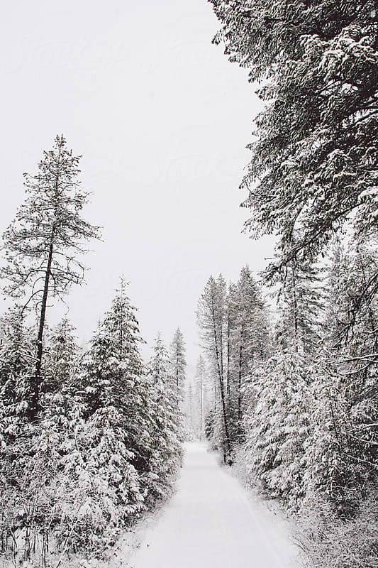 Snow covered road on a snowy day by Justin Mullet for Stocksy United