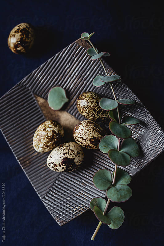 Quail eggs with eucalyptus by Tatjana Zlatkovic for Stocksy United