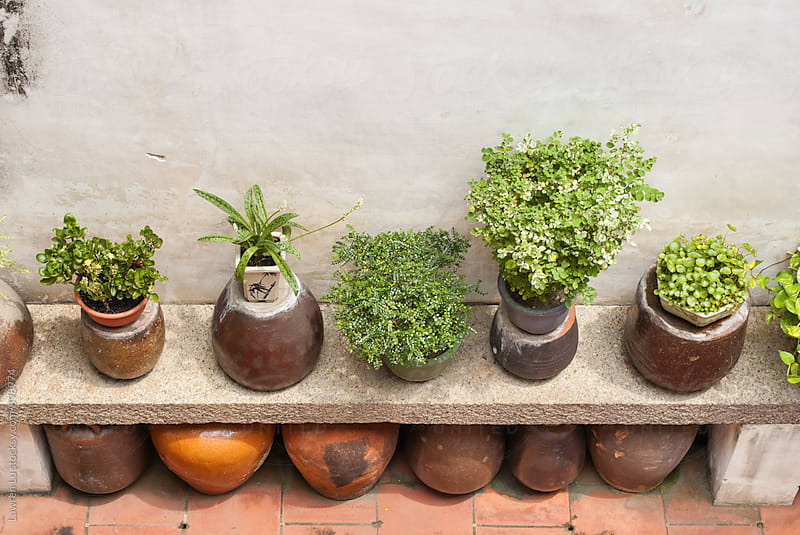 Green plants on flagstone and pottery underneath by Lawren Lu for Stocksy United