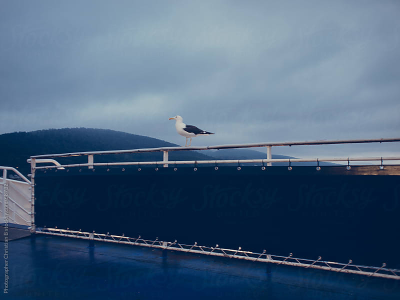 Seagull on a railing by Photographer Christian B for Stocksy United