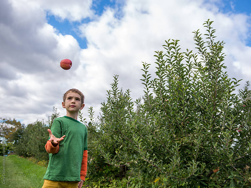 Boy stands in an orchard, tossing an apple in the air and catching it by Cara Dolan for Stocksy United