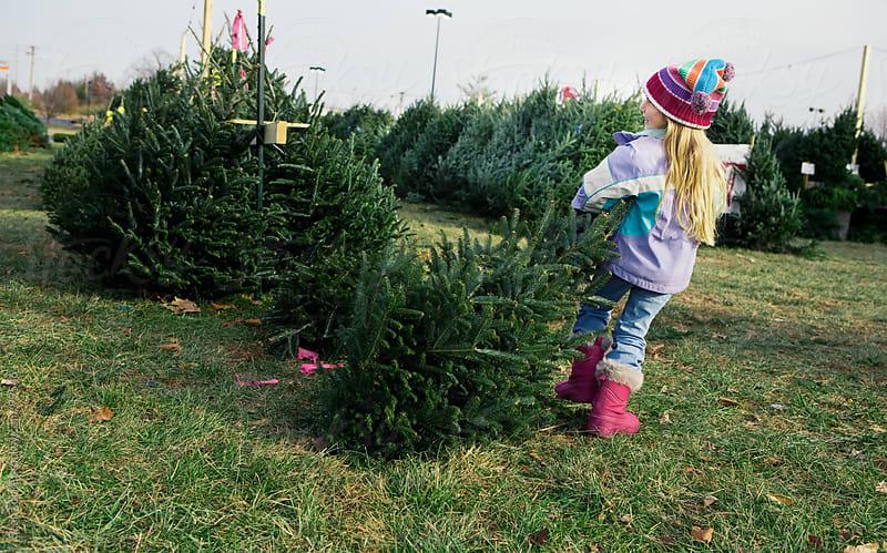 Tree Lot: Little Girl Pulls Favorite Tree by Sean Locke for Stocksy United