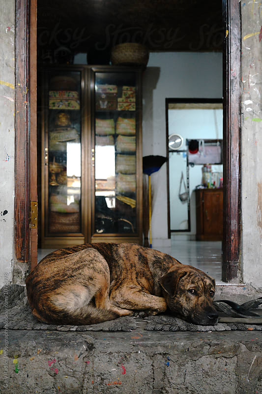 Watch Dog Guarding Entrance to Balinese Home by Gary Radler Photography for Stocksy United