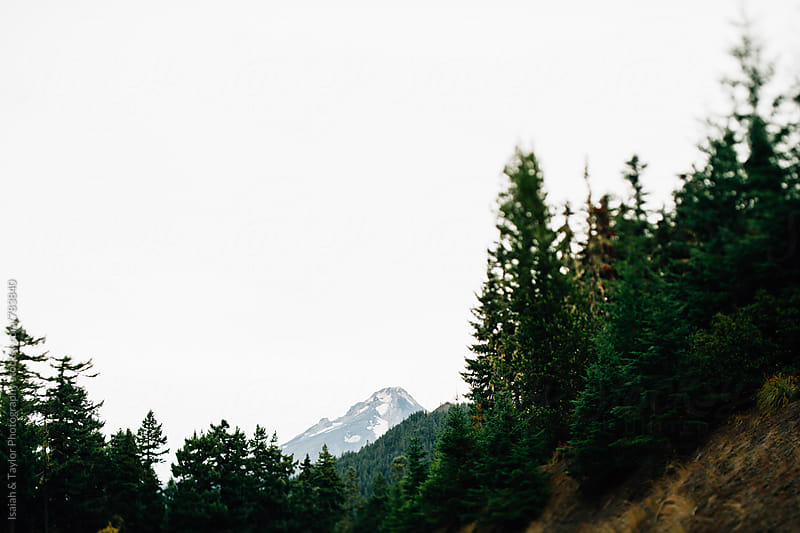 Mountain peeking out of tree landscape by Isaiah & Taylor Photography for Stocksy United