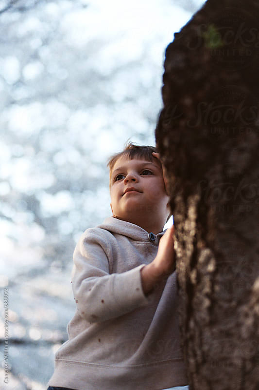 Young boy leaning against a cherry tree with blossoms in the background  by Cameron Whitman for Stocksy United